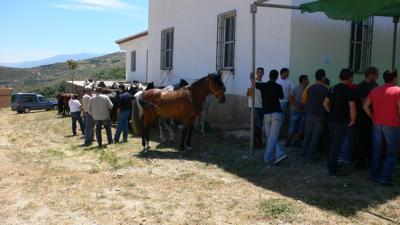 The horses resting and their riders at the bar