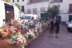 Widows buying flowers for All Saints Day